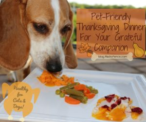 Thanksgiving Dinner Recipe For Your Dog and Cat